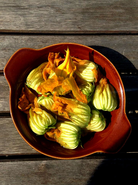 Zucchini (courgette) flowers