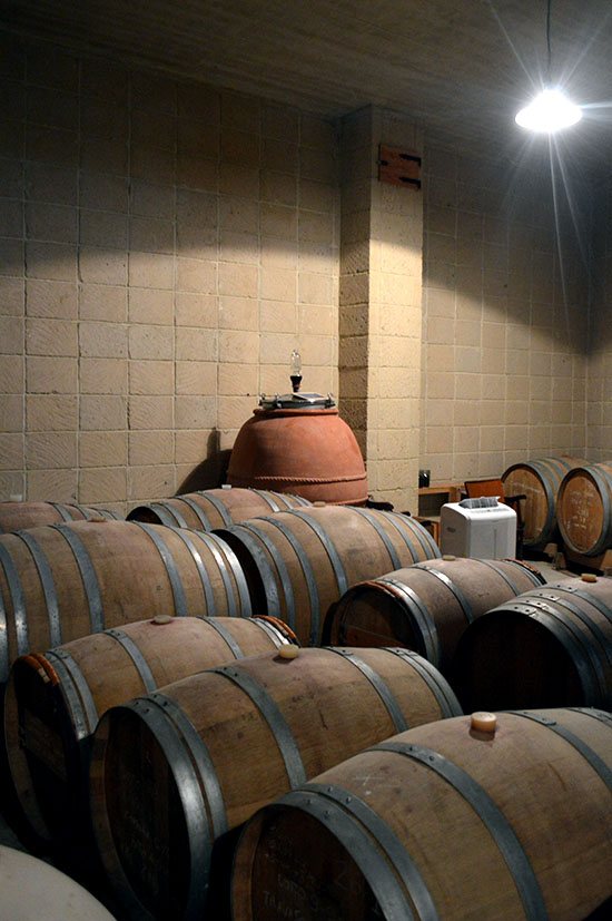 The wine ageing in oak barrels (and an amphora)