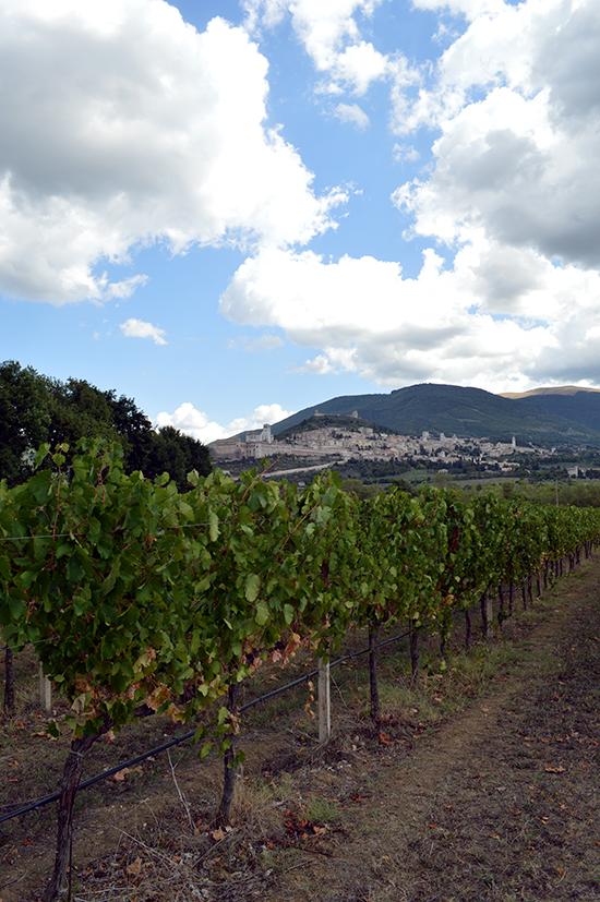 Assisi from Saio vineyards